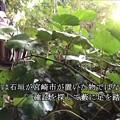 Photos: 20201115 aoshima bussharitou011