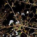 Photos: 桜と月