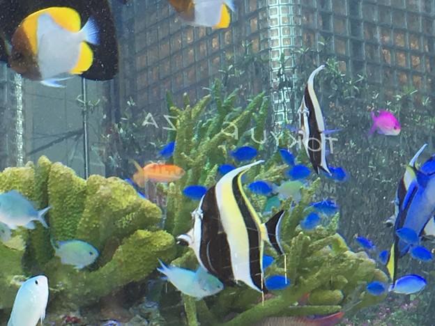 銀座で熱帯魚