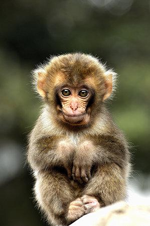 小猿(2)