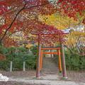 2018 竈門神社の紅葉3