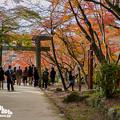 2018 竈門神社の紅葉6