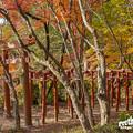 2018 竈門神社の紅葉7