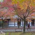 Photos: 呑山観音寺の紅葉11