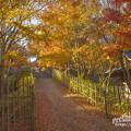 呑山観音寺の紅葉15