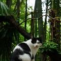 Photos: 竹林に居たコ