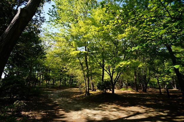 新緑の小宮公園