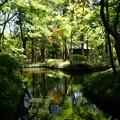 写真: 放生池 2