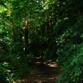 写真: 林への入り口