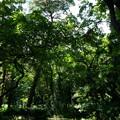 写真: 森の中心部