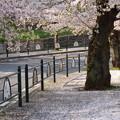 Photos: 散り初めし日