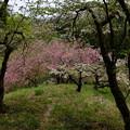Photos: 眼下の春模様 2