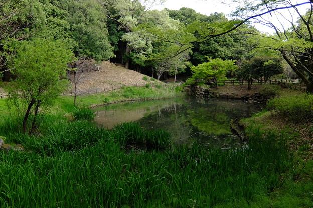 ひょうたん池に至る