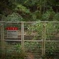 イモリ池は柵の中