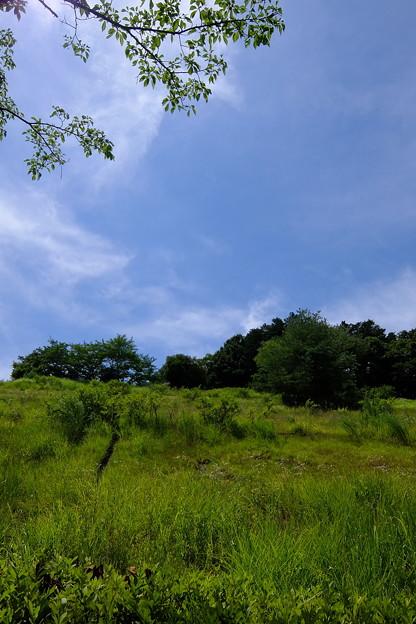 ハーブ園はこの丘に