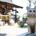 写真: 奉納猫ちん