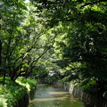 Photos: 千手小橋より 3