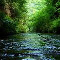 写真: 水面ギリギリで