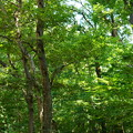 木漏れ日の小径 再び