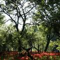 写真: 木漏れ日のスポットライト 4