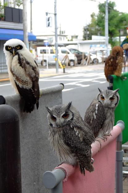 Photos: 〈喜平橋から始まる篇〉