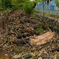 写真: 台風の爪痕 2