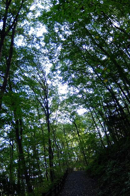 次第に明けゆく森