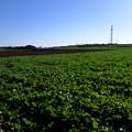 Photos: 広大な農地