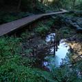 湿地と成す