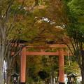 参道は、秋。