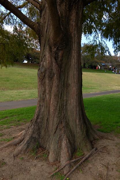 樹木情弱 B