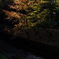 Photos: 紅葉にスポットライト