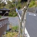 Photos: 都幾川 (65)