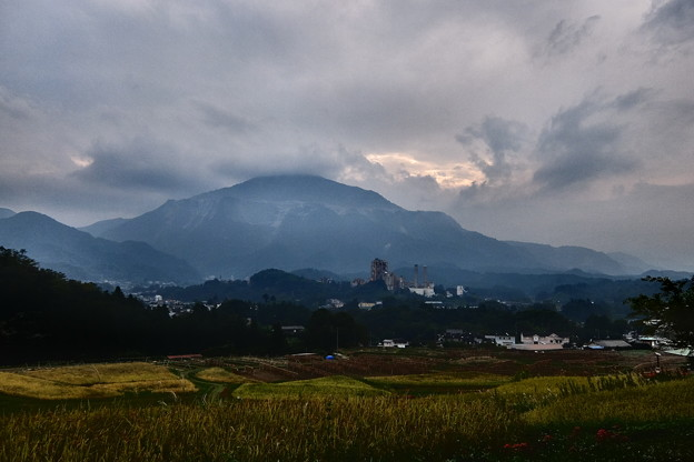 Photos: 曼珠沙華 (110)