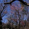 Photos: 丘陵 (98)