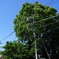 《桜橋から西へ》