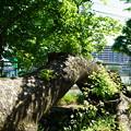 Photos: 桜橋から (5)