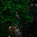 桜橋から (9)