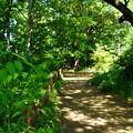Photos: 桜橋から (12)
