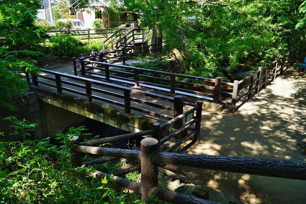 桜橋から (13)