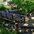 Photos: 桜橋から (13)