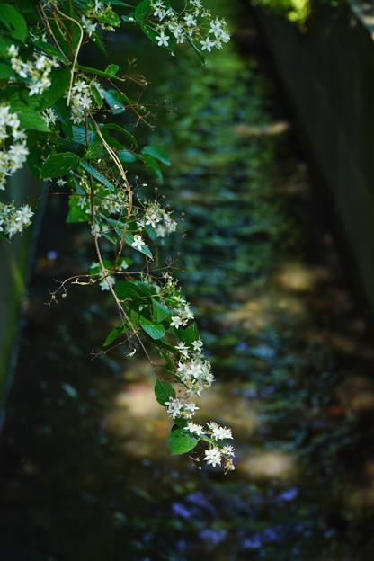 Photos: 桜橋から (14)