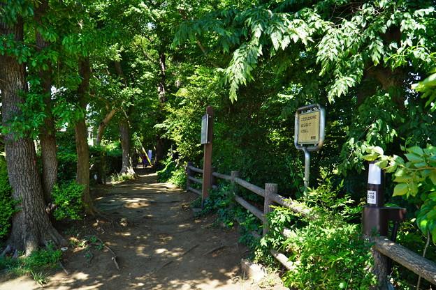桜橋から (28)