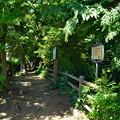 Photos: 桜橋から (28)