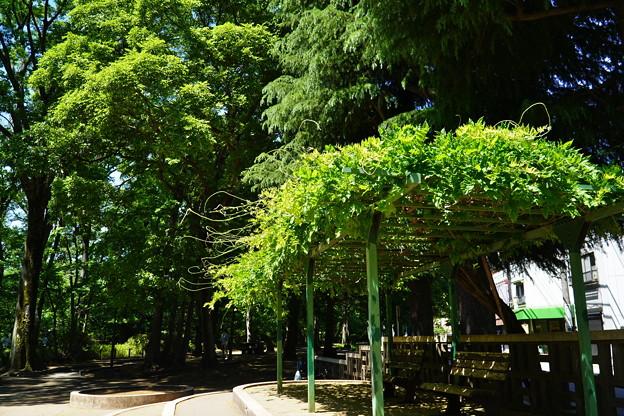 Photos: 桜橋から (33)
