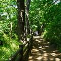 Photos: 桜橋から (34)