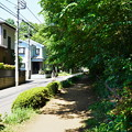 Photos: 桜橋から (35)