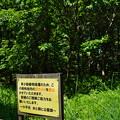 Photos: 桜橋から (36)