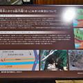Photos: 桜橋から (44)
