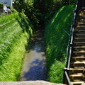 Photos: 桜橋から (45)